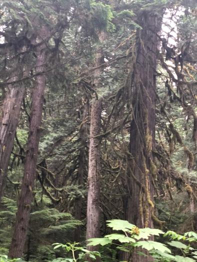 More big ass trees