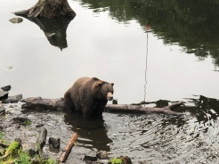 Turns out we hiked to the bear sanctuary